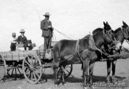 Mr. Legg and Mules in Dickens County, Texas